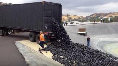 Photo of Warum kippt man in L.A. tausende schwarze Bälle ins Wasser?