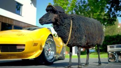 Photo of [Sponsored Post] No Money, No Problem – Das Schwarze Schaf macht auf dicke Hose!