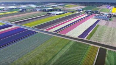 Photo of Tulpenfelder aus der Vogelperspektive