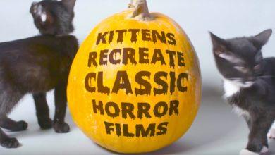 Bild von Katzenbabies stellen klassische Horrorfilme nach